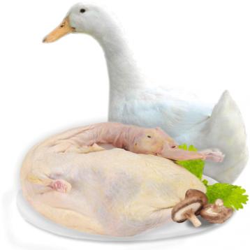 69元包顺丰!鸭肉生鲜 大白鸭土鸭子 净重约1000g