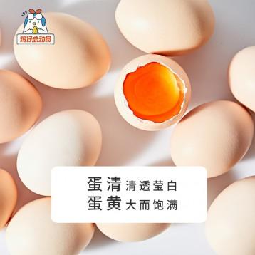 32.90元包邮!五星级酒店供应商:鸡仔总动员 当日A级鲜鸡蛋40枚(单枚35-45g)