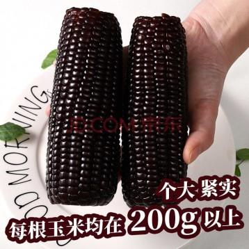 山西忻州特產:逅甜真空包裝 微甜糯 黑糯玉米200g*8穗